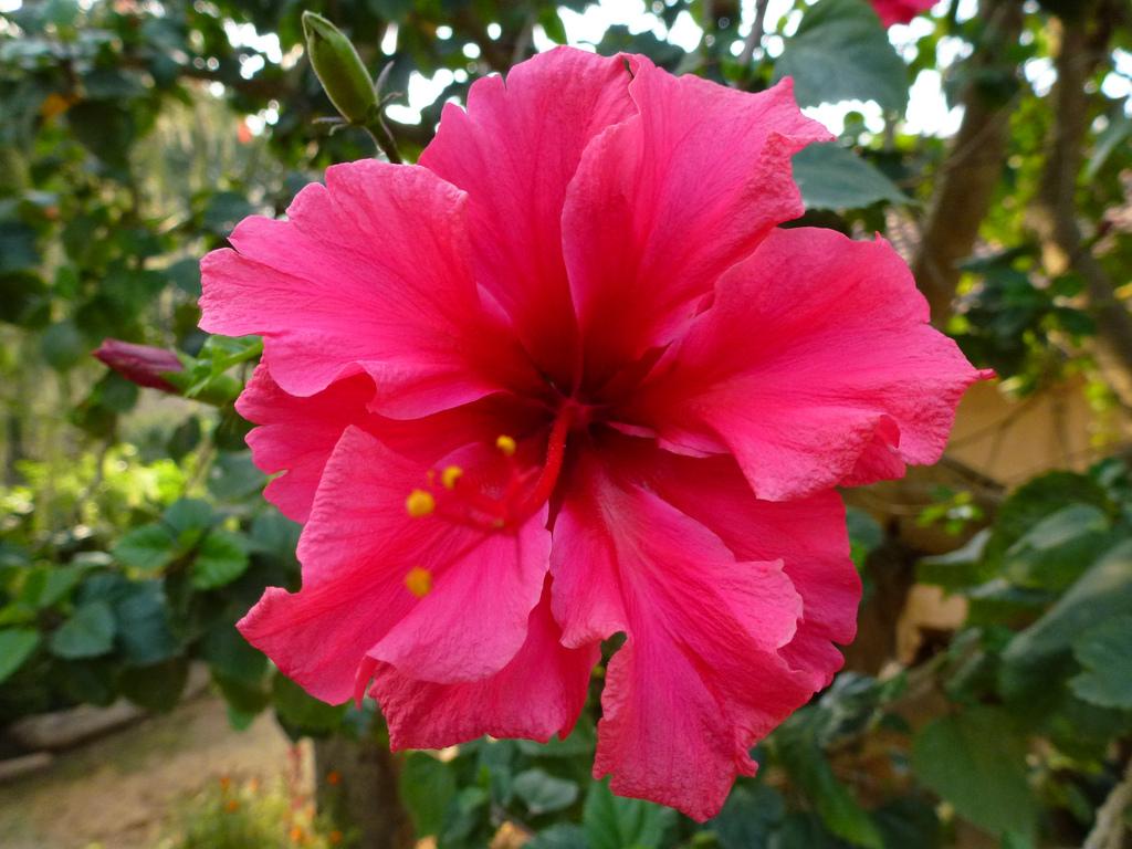 Vivid red flower Thakudwara Bardia