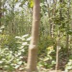 Dense forest, Bardia National Park, Bardia