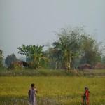 Local women working in the fields, Thakudwara