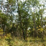 Thick forest, Bardia National Park, Bardia